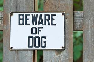 dog bites, Orange County Injury Attorney, injuries from a dog bite