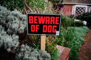 Dog bite, attack, warning